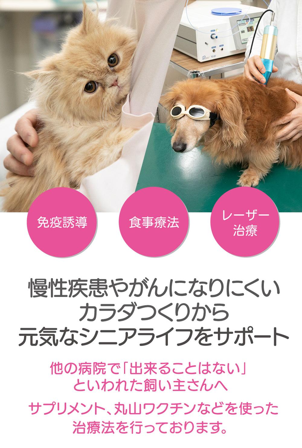 まねき猫ホスピタル|大阪府・守口市の動物病院